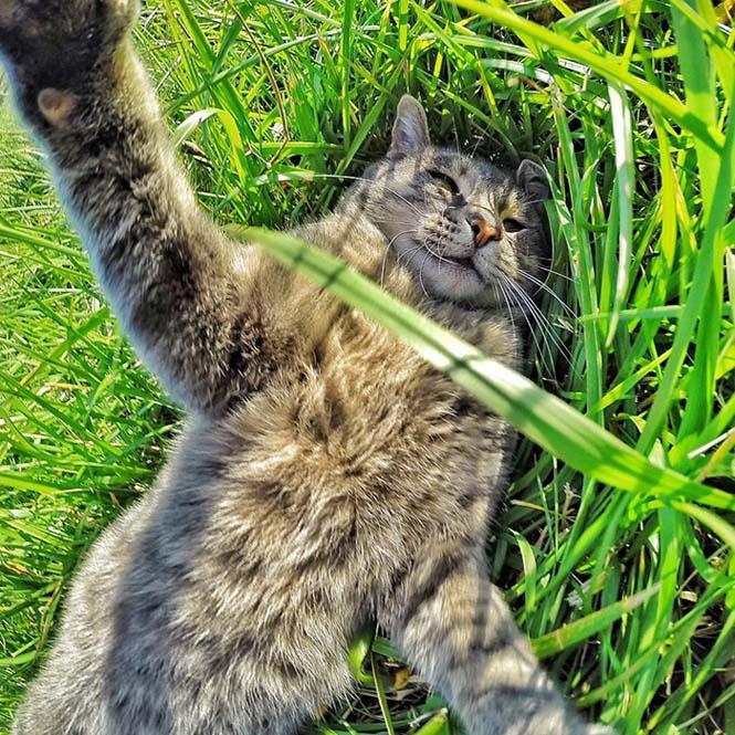 Γάτα βγάζει απίστευτες selfies (3)