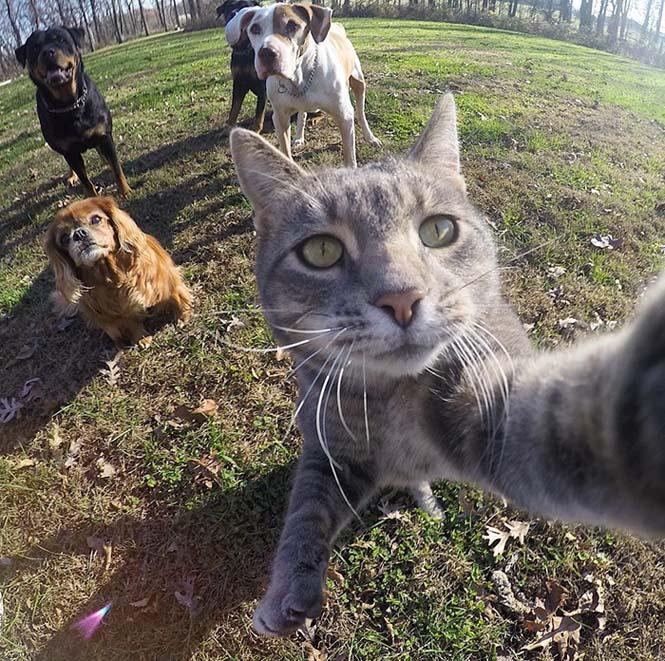 Γάτα βγάζει απίστευτες selfies (4)