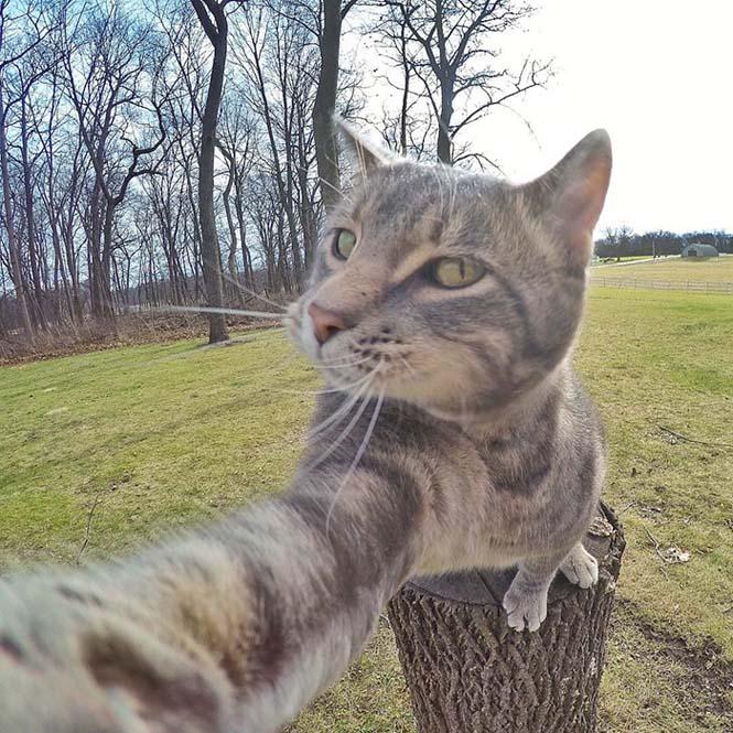 Γάτα βγάζει απίστευτες selfies (5)