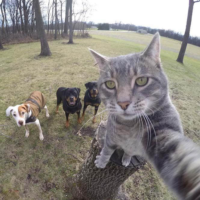 Γάτα βγάζει απίστευτες selfies (6)