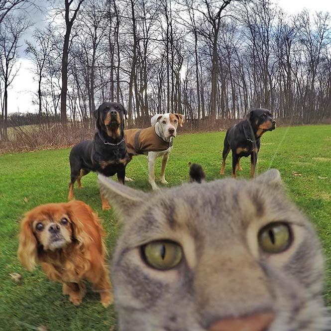 Γάτα βγάζει απίστευτες selfies (7)