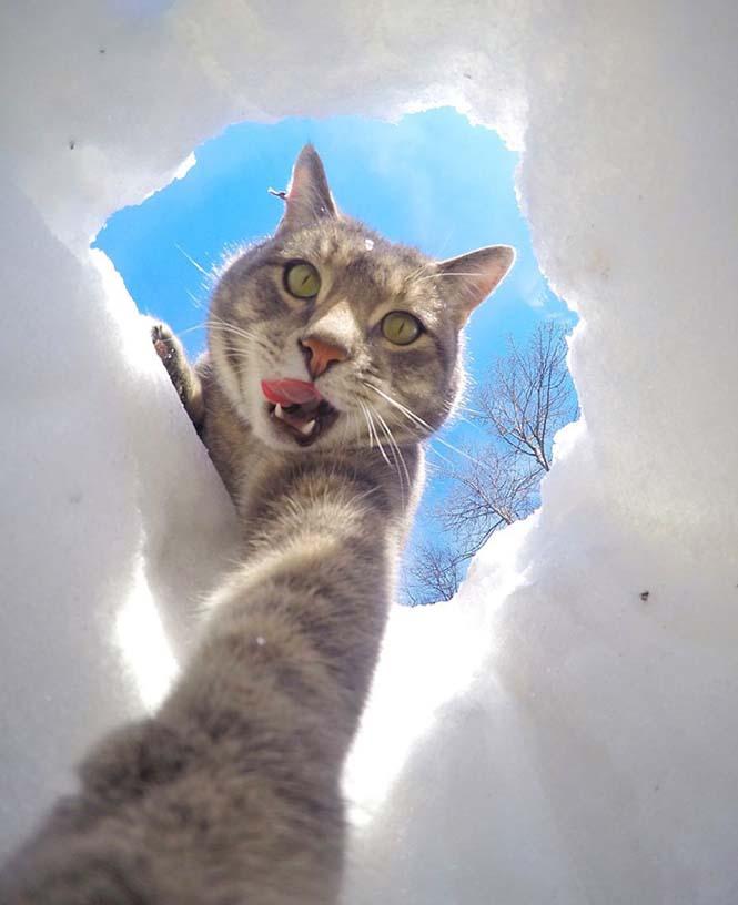 Γάτα βγάζει απίστευτες selfies (9)