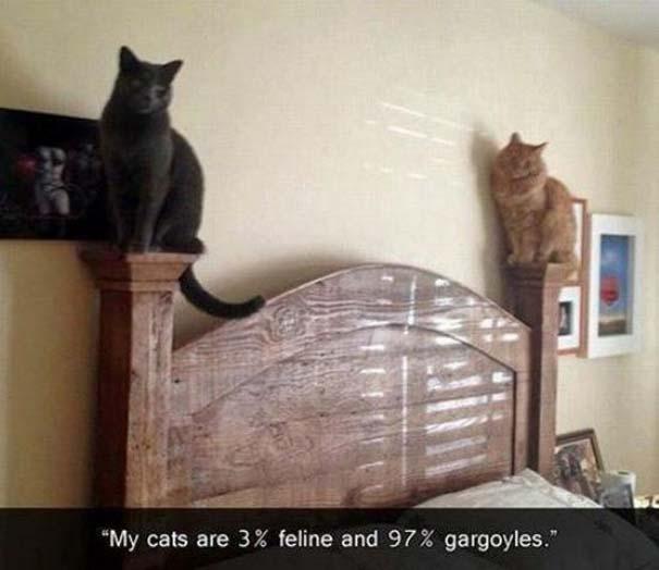Γάτες που... κάνουν τα δικά τους! #24 (4)