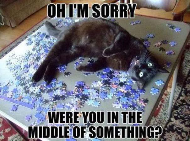Γάτες που... κάνουν τα δικά τους! #24 (5)