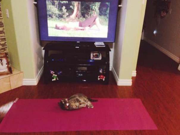 Γάτες που... κάνουν τα δικά τους! #24 (6)