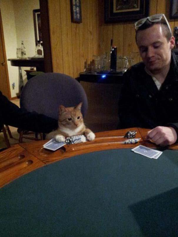 Γάτες που... κάνουν τα δικά τους! #24 (7)