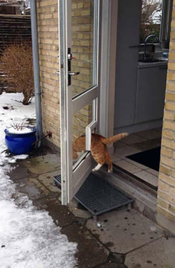 Γάτες που... κάνουν τα δικά τους! #24 (9)