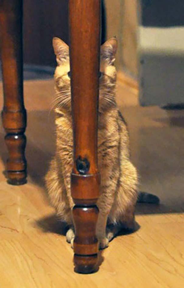 Γάτες που... κάνουν τα δικά τους! #24 (11)