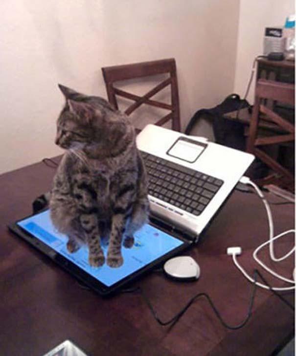 Γάτες που... κάνουν τα δικά τους! #24 (14)