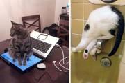 Γάτες που... κάνουν τα δικά τους! #24 (16)