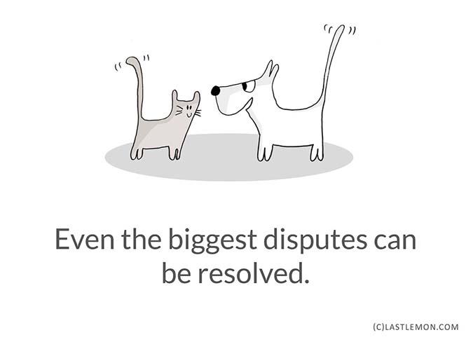 Mαθήματα ζωής από γάτες (11)