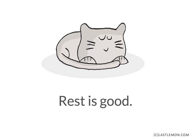 Mαθήματα ζωής από γάτες (15)