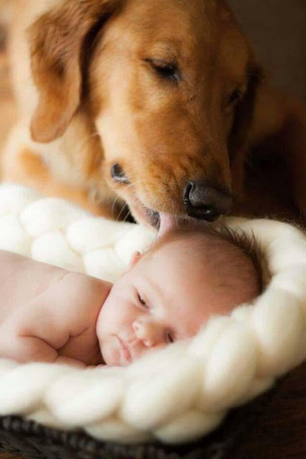 Μωρά και σκύλοι σε αξιολάτρευτες φωτογραφίες (3)