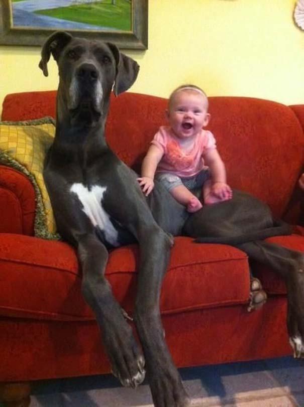 Μωρά και σκύλοι σε αξιολάτρευτες φωτογραφίες (8)