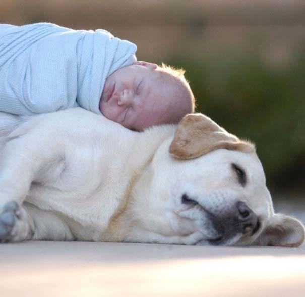 Μωρά και σκύλοι σε αξιολάτρευτες φωτογραφίες (12)