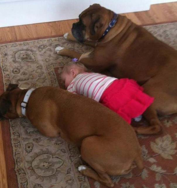 Μωρά και σκύλοι σε αξιολάτρευτες φωτογραφίες (18)