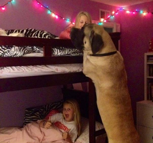 Μωρά και σκύλοι σε αξιολάτρευτες φωτογραφίες (19)