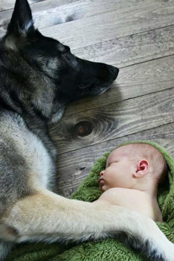 Μωρά και σκύλοι σε αξιολάτρευτες φωτογραφίες (22)