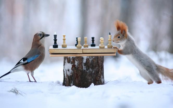 Μια ιδιαίτερη παρτίδα σκάκι | Φωτογραφία της ημέρας