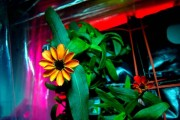 Το πρώτο λουλούδι που άνθισε στο διάστημα (1)