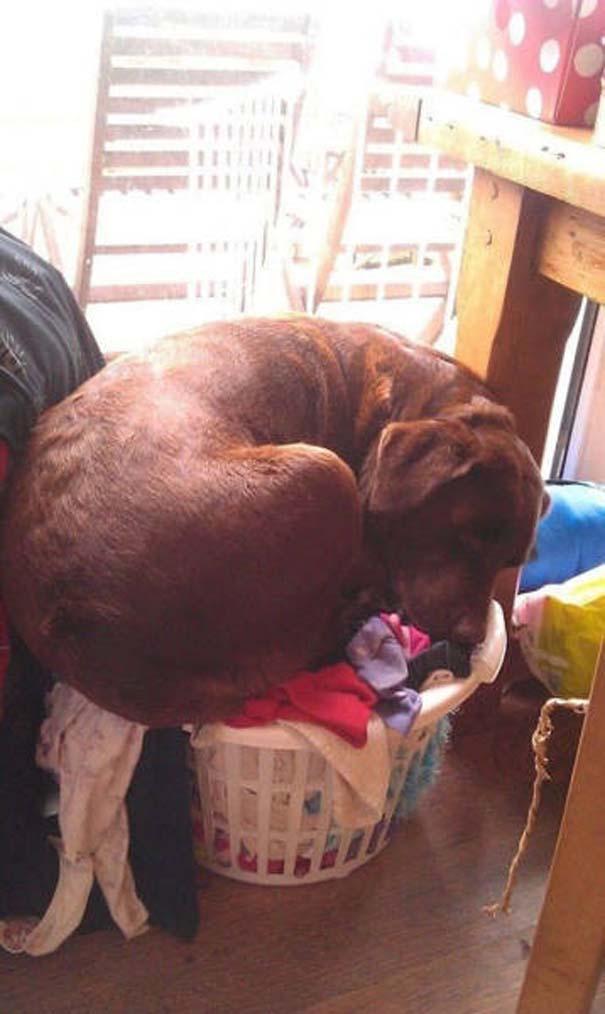 Σκύλοι που κοιμούνται όπου να 'ναι (3)