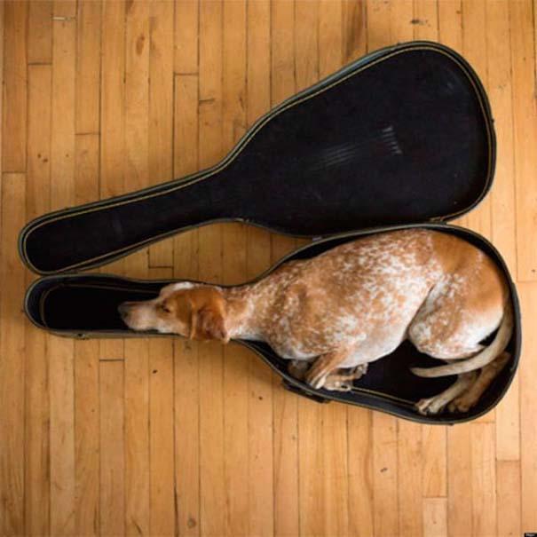 Σκύλοι που κοιμούνται όπου να 'ναι (7)