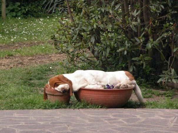 Σκύλοι που κοιμούνται όπου να 'ναι (14)