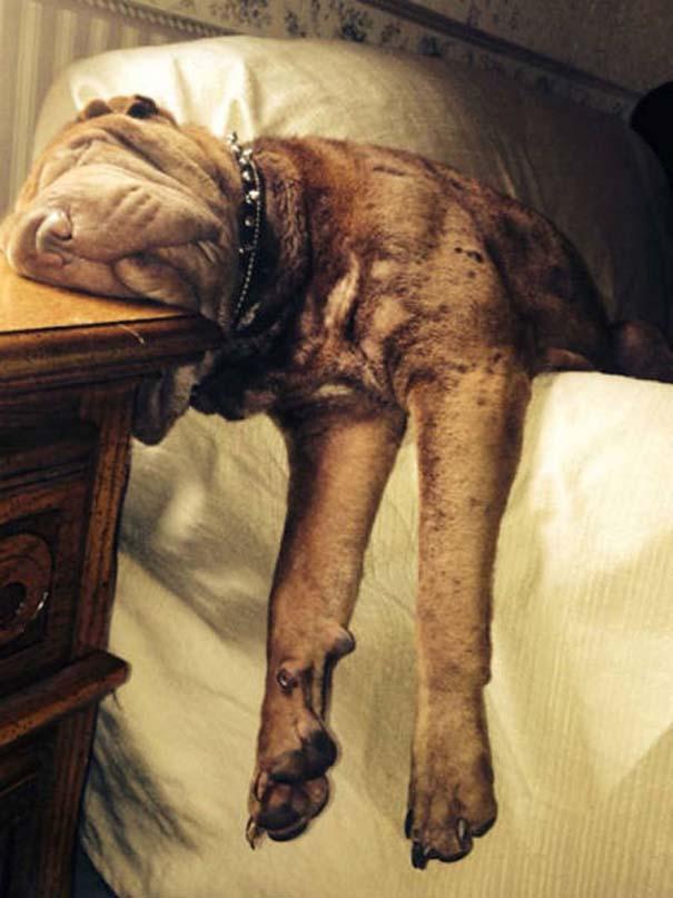 Σκύλοι που κοιμούνται όπου να 'ναι (18)