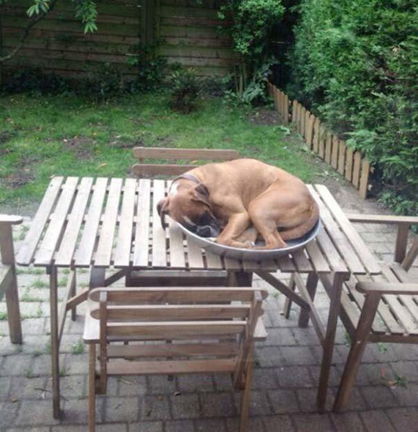 Σκύλοι που κοιμούνται όπου να 'ναι (22)
