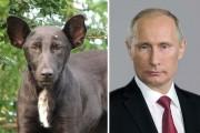 Ζώα που έχουν εκπληκτική ομοιότητα με διάσημα πρόσωπα (5)