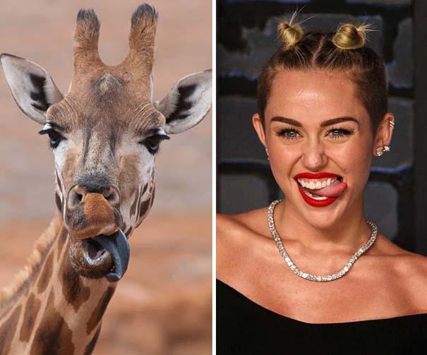 20 ακόμη ζώα που έχουν εκπληκτική ομοιότητα με διάσημα πρόσωπα (6)