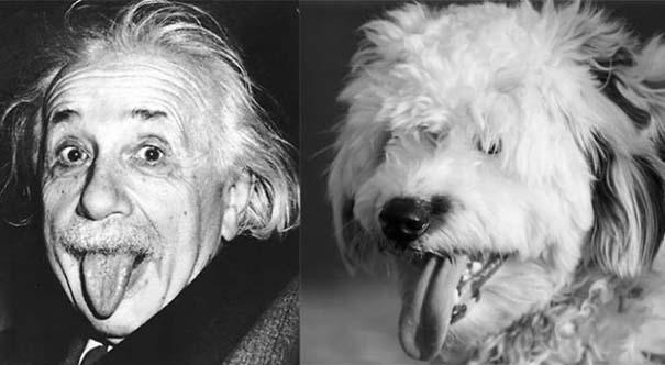 20 ακόμη ζώα που έχουν εκπληκτική ομοιότητα με διάσημα πρόσωπα (19)