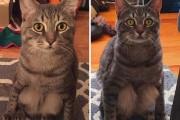 Ζευγάρι υιοθέτησε αδέσποτη γάτα και στη συνέχεια ανακάλυψε πως δεν είναι σαν τις υπόλοιπες γάτες (4)