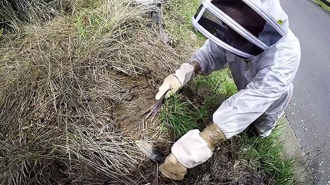 Αν φοβάστε τις σφήκες, αυτό το βίντεο είναι σκέτος εφιάλτης