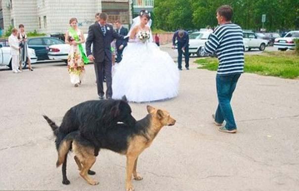 Αστείες φωτογραφίες γάμων #55 (3)