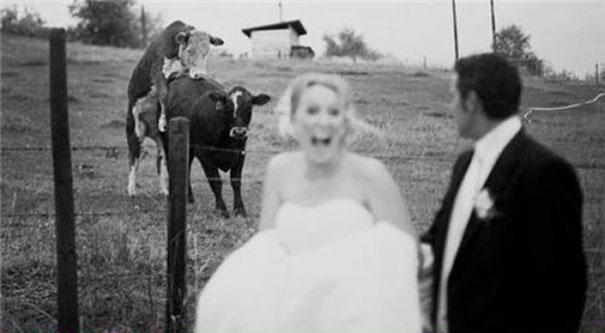 Αστείες φωτογραφίες γάμων #55 (14)