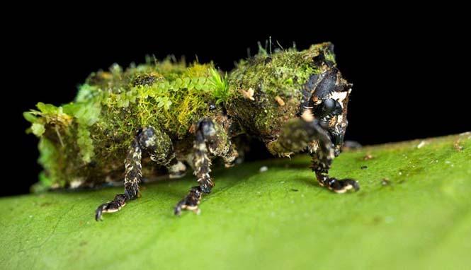 Έντομα - σπεσιαλίστες του καμουφλάζ που γίνονται ένα με το περιβάλλον (1)