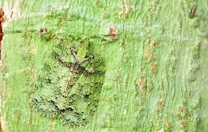 Έντομα - σπεσιαλίστες του καμουφλάζ που γίνονται ένα με το περιβάλλον (4)