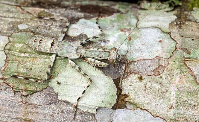 Έντομα - σπεσιαλίστες του καμουφλάζ που γίνονται ένα με το περιβάλλον (6)