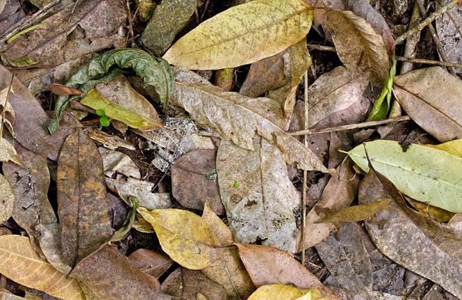 Έντομα - σπεσιαλίστες του καμουφλάζ που γίνονται ένα με το περιβάλλον (7)