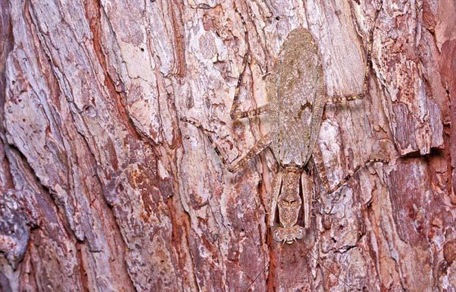 Έντομα - σπεσιαλίστες του καμουφλάζ που γίνονται ένα με το περιβάλλον (9)