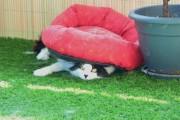 Γάτες που... κάνουν τα δικά τους! #25 (6)
