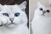 Αυτή η γάτα έχει τα πιο όμορφα μάτια που έχετε δει (1)