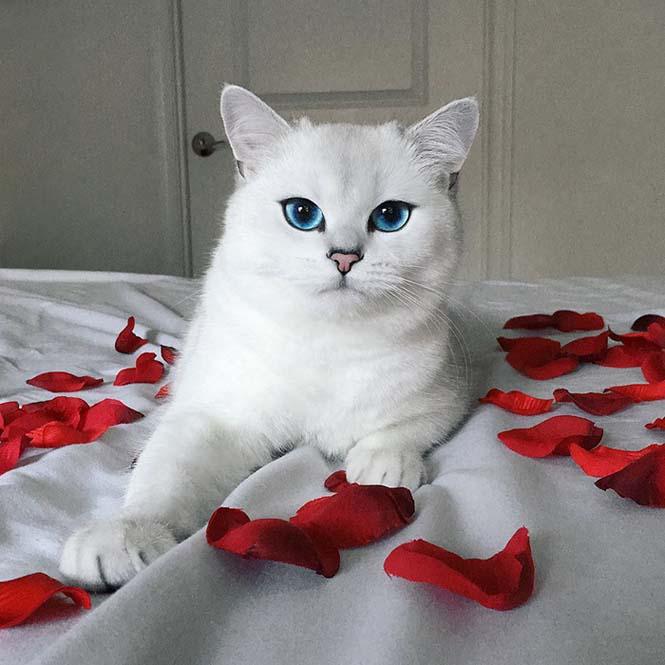 Αυτή η γάτα έχει τα πιο όμορφα μάτια που έχετε δει (3)