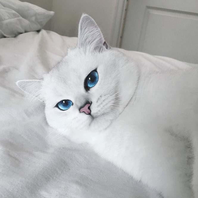 Αυτή η γάτα έχει τα πιο όμορφα μάτια που έχετε δει (4)