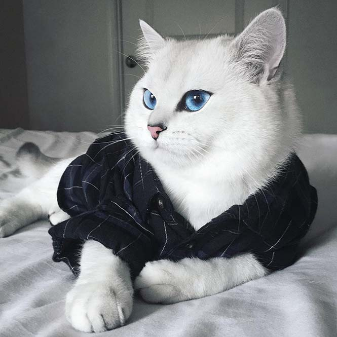 Αυτή η γάτα έχει τα πιο όμορφα μάτια που έχετε δει (5)