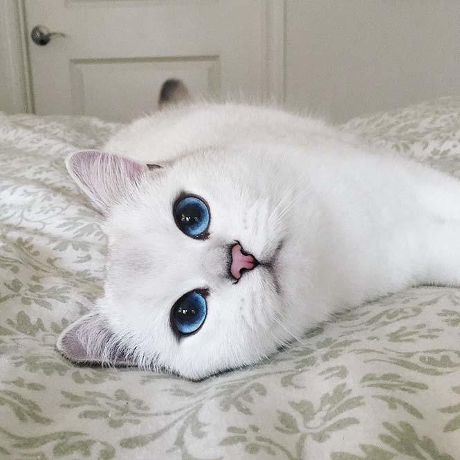 Αυτή η γάτα έχει τα πιο όμορφα μάτια που έχετε δει (6)