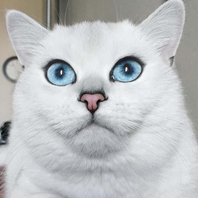 Αυτή η γάτα έχει τα πιο όμορφα μάτια που έχετε δει (7)