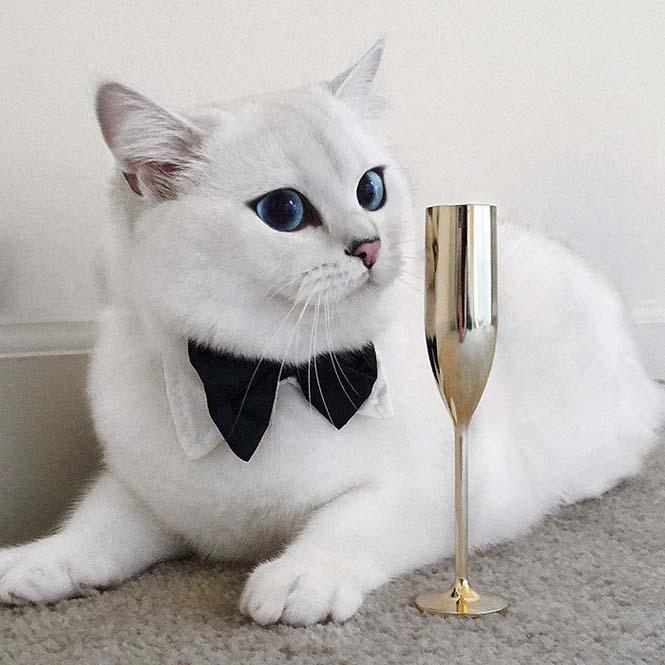 Αυτή η γάτα έχει τα πιο όμορφα μάτια που έχετε δει (8)