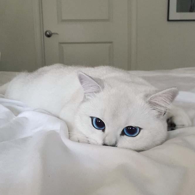 Αυτή η γάτα έχει τα πιο όμορφα μάτια που έχετε δει (10)